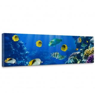 Leinwandbild Underwater World Aquarium Unterwasser Meer Fische Riff Korallenriff   no. 33
