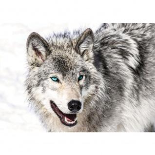 Fototapete Tiere Tapete Husky Hund Winter Schnee grau | no. 1518