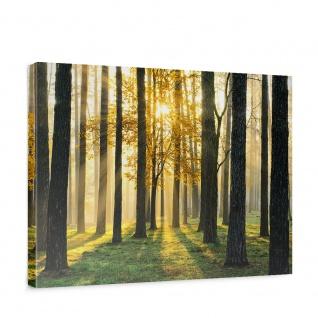 Leinwandbild Sunlight Forest II Wald Bäume Sonnenstrahlen grün Ruhe   no. 62