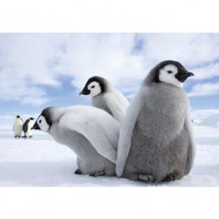 Fototapete Tiere Tapete Pinguine Tiere Schnee Himmel weiß | no. 2658