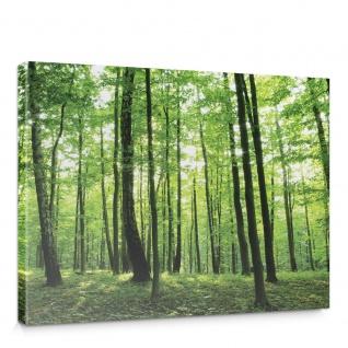 Leinwandbild Bäume Wald Sonne Wiese   no. 528