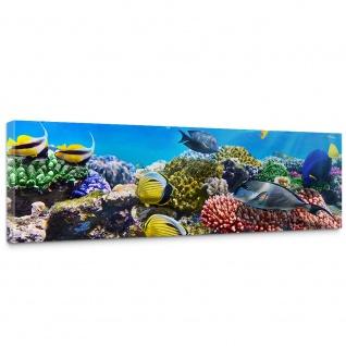 Leinwandbild Underwater Reef Aquarium Unterwasser Meer Fische Riff Korallenriff   no. 105
