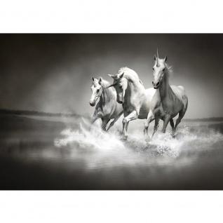Fototapete Tiere Tapete Einhörner Wasser Pferd Wasser Schimmel Rennpferd schwarz - weiß | no. 1016
