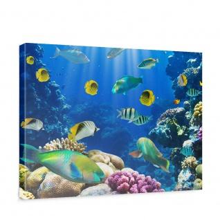 Leinwandbild Underwater World Aquarium Unterwasser Meer Fische Riff Korallenriff | no. 33 - Vorschau 1
