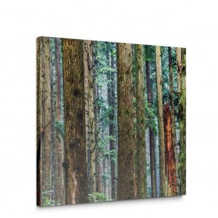 Leinwandbild Wald Natur Baum Pflanze | no. 5053