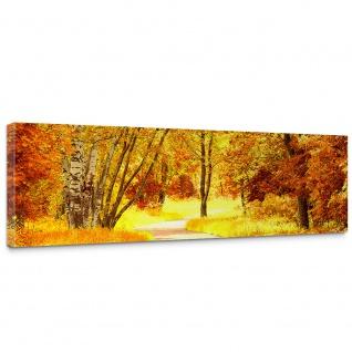 Leinwandbild Autumn Leaves Herbstblätter Wald Bäume Baum eg Forest Herbst   no. 79