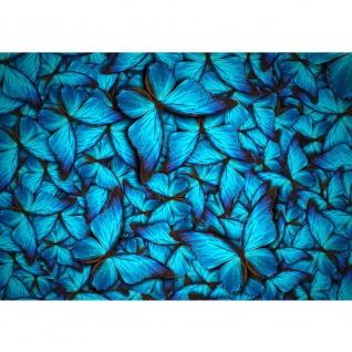 Fototapete Tiere Tapete Schmetterlinge Tiere Natur Blau blau   no. 192