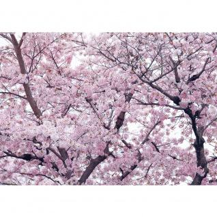 Fototapete Pflanzen Tapete Apfelblüten, Kirschblüten, Baum natural | no. 3529