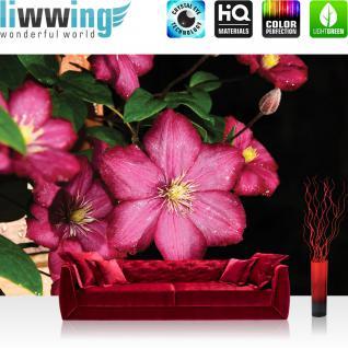 liwwing Vlies Fototapete 152.5x104cm PREMIUM PLUS Wand Foto Tapete Wand Bild Vliestapete - Blumen Tapete Blume Natur Stern Pflanze pink - no. 1211