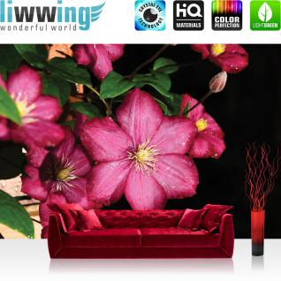 liwwing Vlies Fototapete 208x146cm PREMIUM PLUS Wand Foto Tapete Wand Bild Vliestapete - Blumen Tapete Blume Natur Stern Pflanze pink - no. 1211
