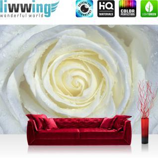 liwwing Vlies Fototapete 416x254cm PREMIUM PLUS Wand Foto Tapete Wand Bild Vliestapete - Blumen Tapete Rose Blume Blüte Wassertropfen Tropfen weiß - no. 2066