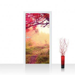 Türtapete - Wald Bäume Herbst Natur Sonne | no. 258
