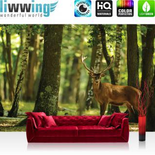 liwwing Vlies Fototapete 312x219cm PREMIUM PLUS Wand Foto Tapete Wand Bild Vliestapete - Tiere Tapete Hirsch Tier Fell Geweih Wald Bäume braun - no. 2996