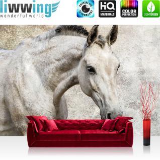 liwwing Vlies Fototapete 416x254cm PREMIUM PLUS Wand Foto Tapete Wand Bild Vliestapete - Tiere Tapete Pferd Tier Fell grau - no. 2206