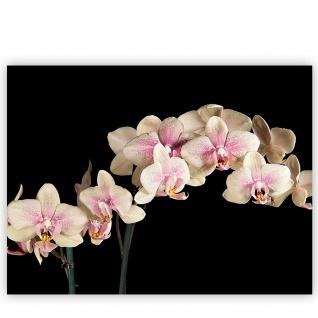 Leinwandbild Creamy Orchid Orchidee Blumen Blumenranke Rosa Pink Natur Pflanzen   no. 104 - Vorschau 2