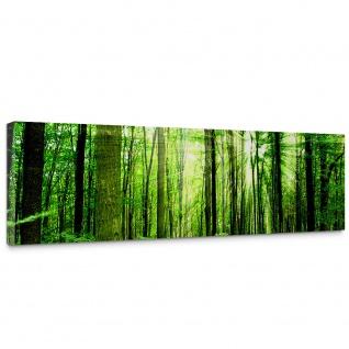 Leinwandbild Sunlight Forest Wald Bäume Sonnenstrahlen grün Ruhe   no. 61