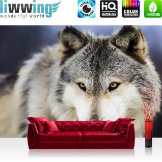 liwwing Vlies Fototapete 416x254cm PREMIUM PLUS Wand Foto Tapete Wand Bild Vliestapete - Tiere Tapete Wolf Kopf Fell beige - no. 2959