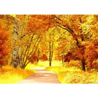 Fototapete Autumn Leaves Wald Tapete Herbstblätter Wald Bäume Baum Forest Herbst braun   no. 79