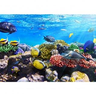 Fototapete Underwater Reef Tiere Tapete Aquarium Unterwasser Meereswelt Meer Fische Riff Korallenrif blau   no. 105