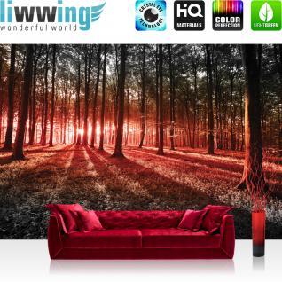 liwwing Fototapete 254x168 cm PREMIUM Wand Foto Tapete Wand Bild Papiertapete - Wald Tapete Sonnenuntergang Wald Bäume Wiese rot - no. 640
