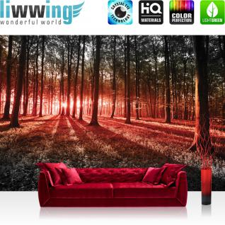 liwwing Vlies Fototapete 300x210 cm PREMIUM PLUS Wand Foto Tapete Wand Bild Vliestapete - Wald Tapete Sonnenuntergang Wald Bäume Wiese rot - no. 640