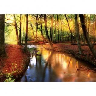 Fototapete Wald Tapete Wälder Bäume Natur Fluss Herbst braun | no. 1355