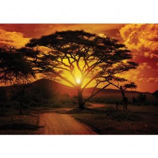 Fototapete Sonnenuntergang Tapete Sonnenuntergang Baum Weg Afrika Giraffe Romantik orange   no. 284