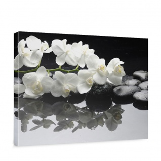 Leinwandbild White Orchids an Black Stones Orchidee Blumen Blumenranke Rosa Natur   no. 97