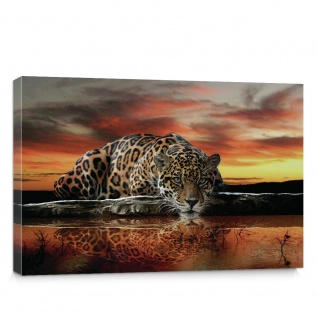 Leinwandbild Jaguar Sonnenuntergang Tiere orange Wasser | no. 315