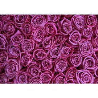 Fototapete Blumen Tapete Blumen Rose Blüten Natur Liebe Love Blüte Lila lila | no. 183