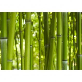 Fototapete Dream of Bamboo Bambus Tapete Wald Urwald Jungle Dschungel Natur tropisch grün | no. 71