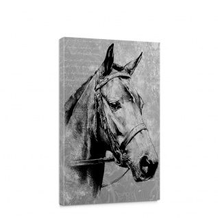 Leinwandbild Pferd Pferde Tiere Natur | no. 5112