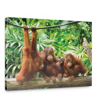 Leinwandbild Affe Affen Orangutan Wald Bäume Dschungel   no. 4906
