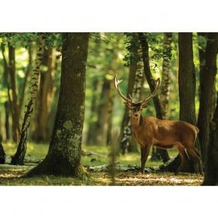 Fototapete Tiere Tapete Hirsch Tier Fell Geweih Wald Bäume braun | no. 2996