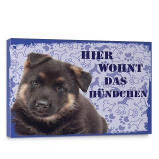 Leinwandbild Schäferhund Haustiere Hunde Tiere   no. 5492