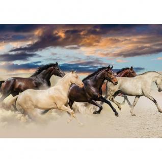 Fototapete Tiere Tapete Pferde Strand Himmel Natur braun | no. 2141