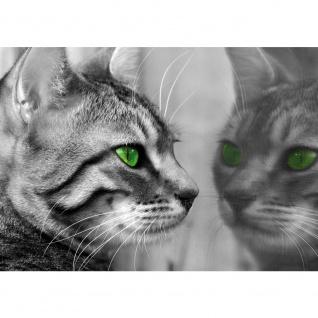 Fototapete Tiere Tapete Katze grüne Augen schwarz - weiß | no. 1826