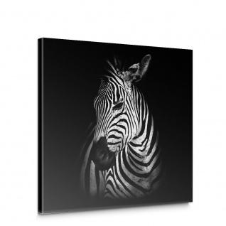 Leinwandbild Zebras Afrika Zootiere schwarz-weiß | no. 5578