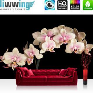 liwwing Vlies Fototapete 400x280 cm PREMIUM PLUS Wand Foto Tapete Wand Bild Vliestapete - CREAMY ORCHID - Orchidee Blumen Blumenranke Rosa Pink Natur Pflanzen - no. 104