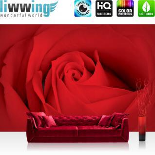 liwwing Vlies Fototapete 416x254cm PREMIUM PLUS Wand Foto Tapete Wand Bild Vliestapete - Blumen Tapete Blüten Rose Rosenblüte rot - no. 2184