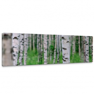 Leinwandbild Birch Forest II Birkenwald 3D perspektive Birke Stämme Wald   no. 81