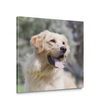 Leinwandbild Labrador Hund Haustiere Tiere   no. 5464
