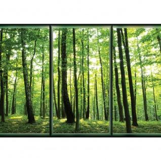 Fototapete Wald Tapete Wälder Bäume Natur Rahmen grün | no. 1558