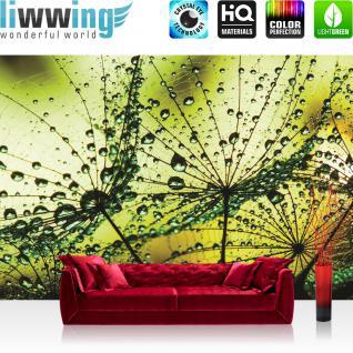 liwwing Vlies Fototapete 312x219cm PREMIUM PLUS Wand Foto Tapete Wand Bild Vliestapete - Blumen Tapete Pusteblume Blume Pflanze Regentropfen Tropfen Regen Netz gelb - no. 2095