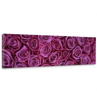 Leinwandbild Blumen Rose Blüten Natur Liebe Love Blüte Lila | no. 183