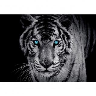 Fototapete Tiere Tapete Tiger Gesicht Auge blau schwarz-weiß blau   no. 426