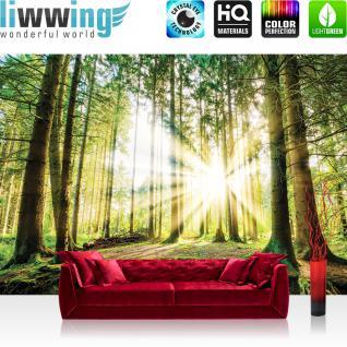 liwwing Vlies Fototapete 416x254cm PREMIUM PLUS Wand Foto Tapete Wand Bild Vliestapete - Wald Tapete Nadelwald Sonnenaufgang Sonnenstrahlen grün - no. 3256