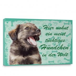 Leinwandbild Schäferhund Haustiere Hunde Tiere   no. 5486