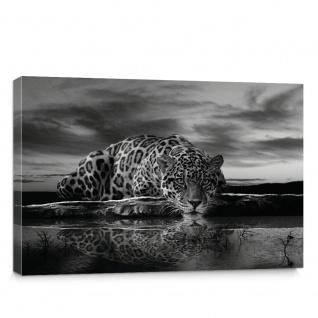 Leinwandbild Jaguar Sonnenuntergang Himmel Wasser | no. 614
