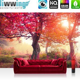 liwwing Vlies Fototapete 400x280 cm PREMIUM PLUS Wand Foto Tapete Wand Bild Vliestapete - Wald Bäume Natur - no. 242